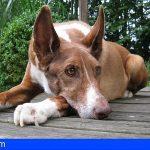 Investigado por abandonar a su perra la cual murió envenenada posteriormente en La Palma
