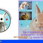 Canarias muestra su solidaridad ante el caso del conejo abandonado en Alcaravaneras