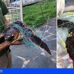 Encuentran en Gran Canaria a 2 tortugas enredadas en 17 kilos de redes