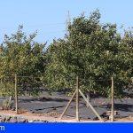 Canarias | «Vercochar» investiga la regeneración de los suelos agrarios y forestales con compost