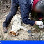 Nacional | Investigan a 28 personas por envenenar a cientos de animales