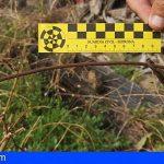 La Gomera | Localizan en Barranco Seco 43 lazos ilegales de caza