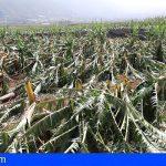 Tenerife estudia solicitar la declaración de 'zona catastrófica' tras el temporal