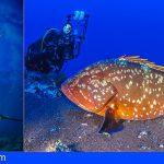 Canarias promociona sus fondos marinos en la Mediterranean Diving Show de Barcelona
