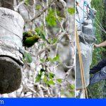 Loro Parque ayuda a proteger al periquito catey en Cuba, utilizando cámaras de vigilancia