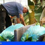 Plátano de Canarias se ve perjudicado por el diferencial de precio en verde y PVP