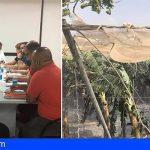 """Guía de Isora pide la declaración de """"zona catastrófica"""" para paliar los daños del sector primario"""