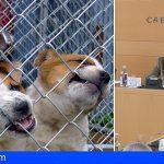 Tenerife reafirma su compromiso contra el abandono y maltrato animal