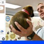 Crean un cómodo buscador para localizar propietarios de animales perdidos