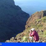 Tenerife tramitó más de 700 denuncias ambientales en 2019