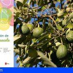 La Gomera refuerza el sector primario con un curso sobre producción de mango y aguacate