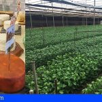 CC-PNC Tenerife solicita medidas urgentes para el sector ganadero y la floricultura
