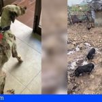 Localizan 12 cadáveres de perros en el Barranco del Río, entre varias actuaciones contra el maltrato animal