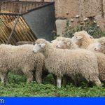 Canarias abre el plazo para las ayudas comunitarias al almacenamiento privado de queso y carne