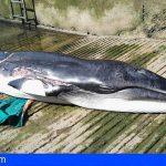 Tenerife ha registrado nueve cetáceos varados durante la cuarentena
