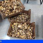 Tenerife | Dos sancionados por recolectar 20 kg de níscalos en el monte de Las Raíces