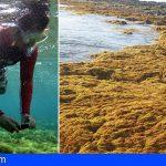 El 'Mujo Picón' del litoral canario, en peligro de extinción