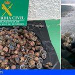 Incautan y devuelven al mar en Candelaria 12 kg de lapas pescadas de forma ilícita
