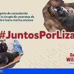 Oasis WildLife Fuerteventura abre un crowdfounding para la operación de cataratas de Liza