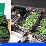 La Orotava | Encuentran 66 plantas de marihuana en un vehículo durante un control de verificación