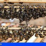 Canarias abona más de 500.000€ a los productores de miel de abeja negra canaria