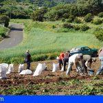 Canarias abona 3,3 millones a los productores de papa de mesa