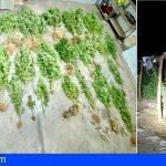 Incautan 15 kilogramos de marihuana en Güímar, durante una fiesta no autorizada