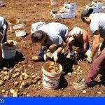 Tenerife | Abierto el plazo de las ayudas a los productores de papas, aguacates y cultivos hortícolas