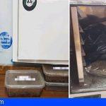 Arona | Captaban a turistas en plena calle para venderles sustancias estupefacientes en un club cannábico
