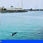 Aconsejan no acercarse a la zona del delfín en Adeje para evitar dañarlo