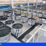 La industria canaria también se resiente por el impacto del Covid-19 en el segundo trimestre del año