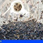 El abandono de envases y residuos supone un gran peligro para la fauna canaria