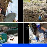 Denuncian, en La Palma, 17 infracciones administrativas en relación con cebos envenenados