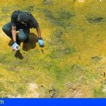 Investigan a un sexagenario en Tejina por arrojar 5 lagartos a un estanque vacío