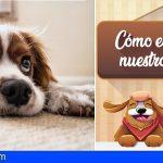 Consejos | «Cómo educar a nuestro perro»