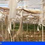 Canarias convoca las subvenciones para sufragar los daños ocasionados por el temporal de febrero