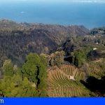 El incendio de La Palma se da por controlado y los vecinos evacuados ya pueden regresar a sus casas