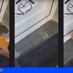Leales.org | Okupas abandonan y dejan encerrado a un gato en una casa en Las Palmas