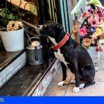 Leales.org | Aumentan los robos de perros amarrados en las tiendas