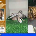 Tenerife | Las trampas de pegamento para roedores, un peligro para las aves