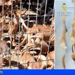 La Guardia Civil salva la vida a 41 perros en grave estado de abandono con síntomas de caquexia y deshidratación