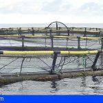 El proyecto PLASMAR + continuará la labor en planificación espacial marina de los archipiélagos de la Macaronesia