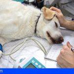 Detenido en Valencia por recaudar donaciones para curar animales y quedárselas