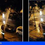 Santa Cruz   Los técnicos y su concejal se contradicen sobre el azote a los árboles con chorros a presión