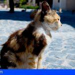 El concejal de Medio Ambiente (PP) en Santa Cruz, amenza a los animalistas con sacrificar los gatos callejeros