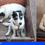 Granadilla saca a licitación el contrato del servicio de recogida de perros abandonados