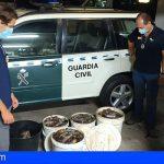 Tenerife | Decomisados más de 120 kg de pescado que había sido capturado de forma ilegal