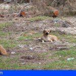 """ASG: """"Las administraciones públicas debemos velar por el mantenimiento y la salvaguarda de los animales"""""""