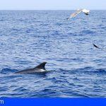 Tenerife acoge el I Congreso Internacional de Avistamiento de Cetáceos desde el próximo día 11