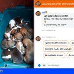 Encuentran 10 cachorros y su madre en un contenedor de basura en Gáldar, Gran Canaria